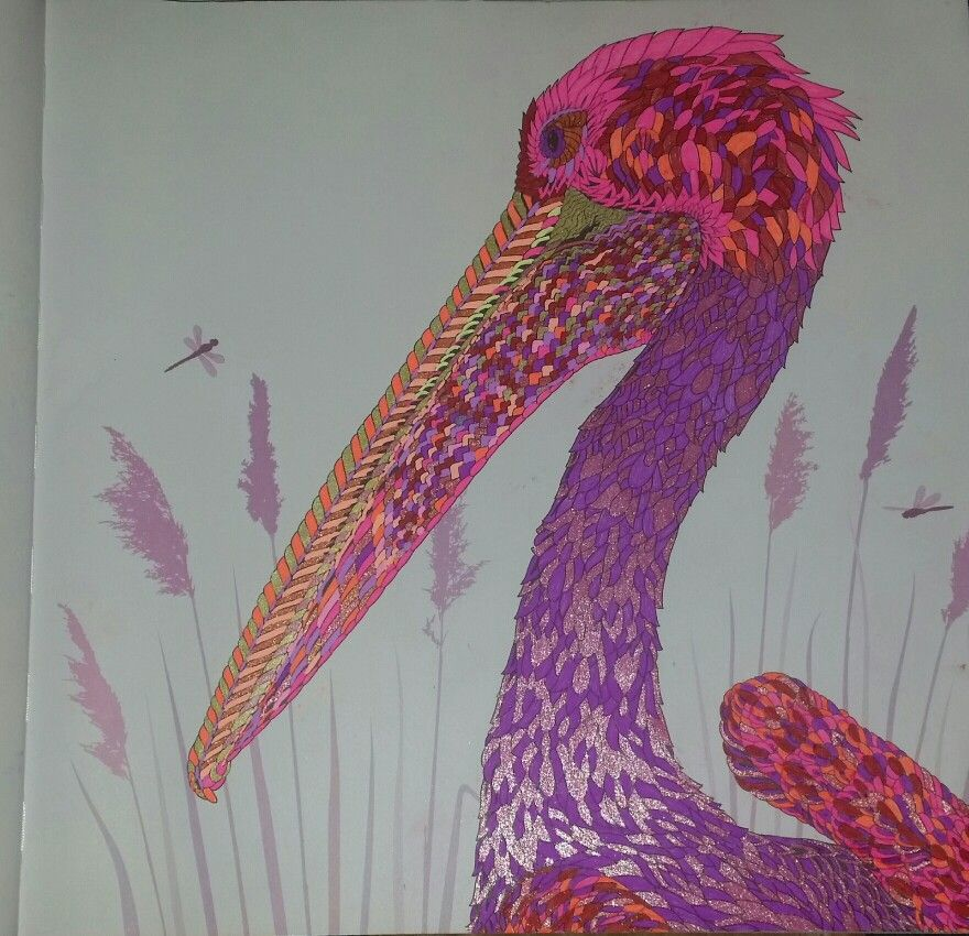 Pelican the aviary colouring book 1 Pinterest Coloring books