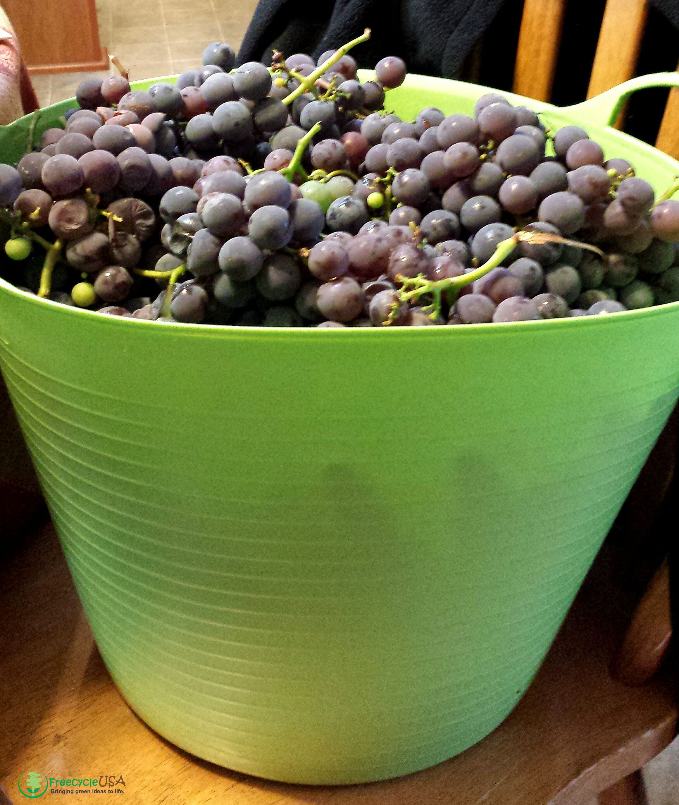 DIY Tips For Growing Grapes For Wine Or Eating