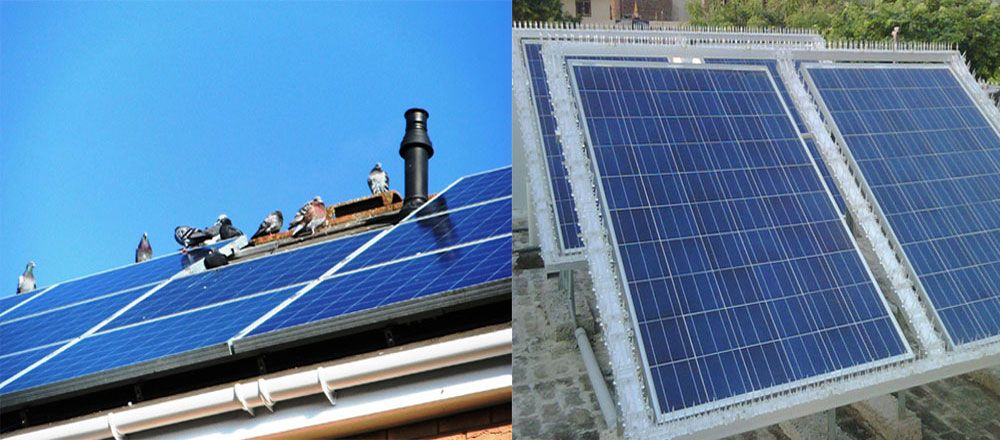 Herbal Pest Control Service Provides Professional Solar Panel Bird Control Services In Noida Delhi Ncr India For Your Home And Bu Solar Panels Solar Paneling