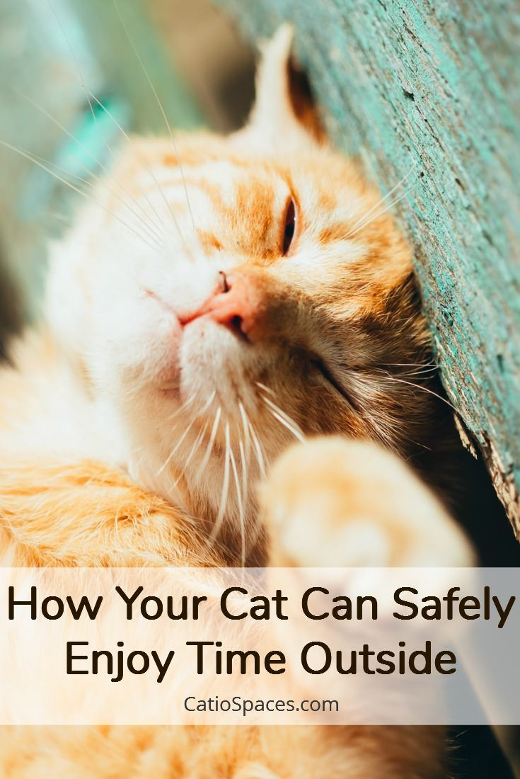 Indoor Cats Live Longer But That Doesn T Mean Your Cat Can T Have Fun Outside Cats Cat Area Cat Enclosure