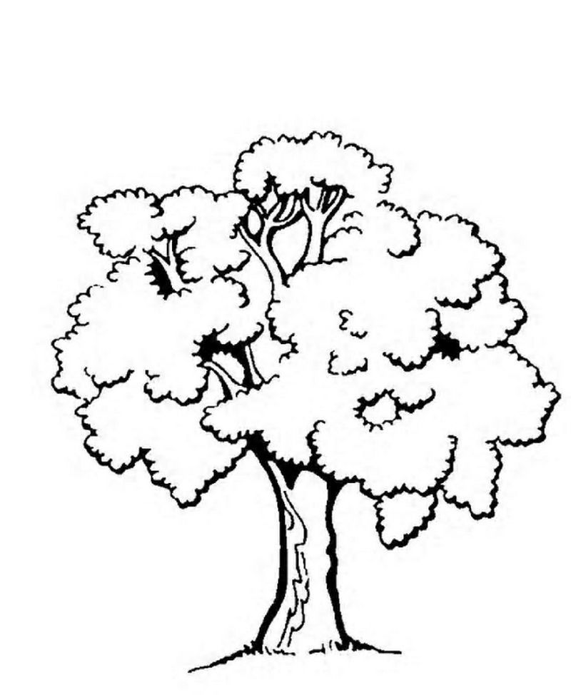 Pine Tree Coloring Pages Free Tree Coloring Page Animal