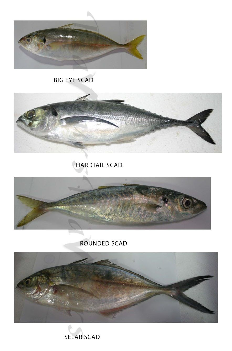Confused Over Fish Names Types Of Fish Fish Animals Name In English