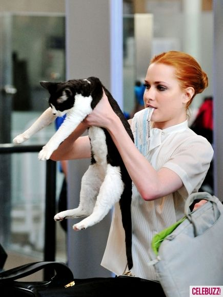 It's a feline on the fly! Evan Rachel Wood takes her cat Nicodemus through airport security.