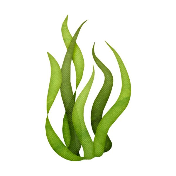 seaweed liked on polyvore featuring seaweed filler green and rh pinterest com au seaweed clipart free seaweed clipart