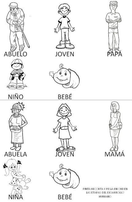 Resultado De Imagen Para Fichas De Las Etapas De La Vida Para Ninos Etapas Del Desarrollo Humano Etapas Del Desarrollo Desarrollo Humano