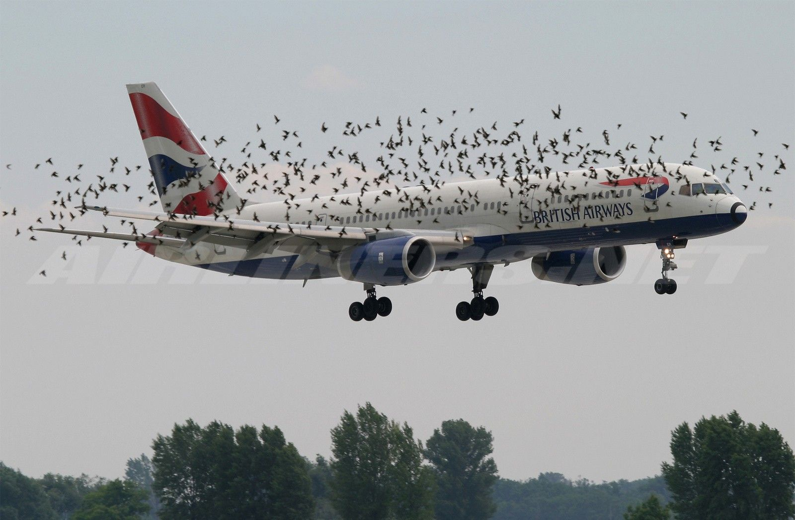 When US Airways Airbus A320 bound for Charlotte, N.C. made an ...