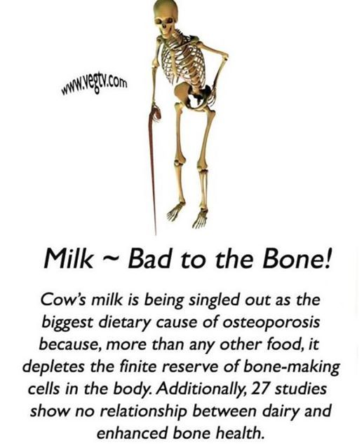 25++ Cows milk and osteoporosis ideas