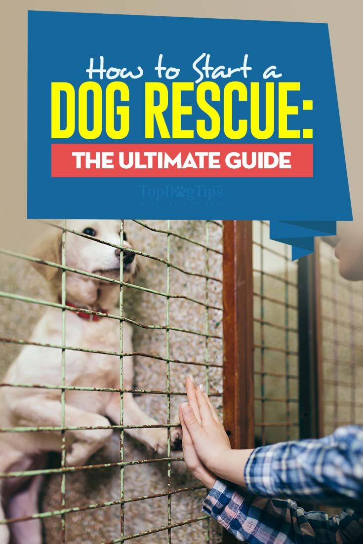 A Guide on How to Start a Dog Rescue
