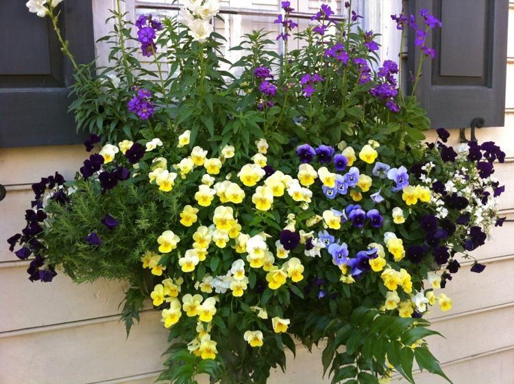 Balkonpflanzen Richtig Einpflanzen Und Pflegen Tipps 9