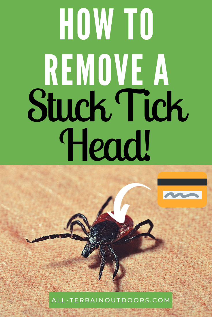 How To Get Rid Of Ticks In My Car