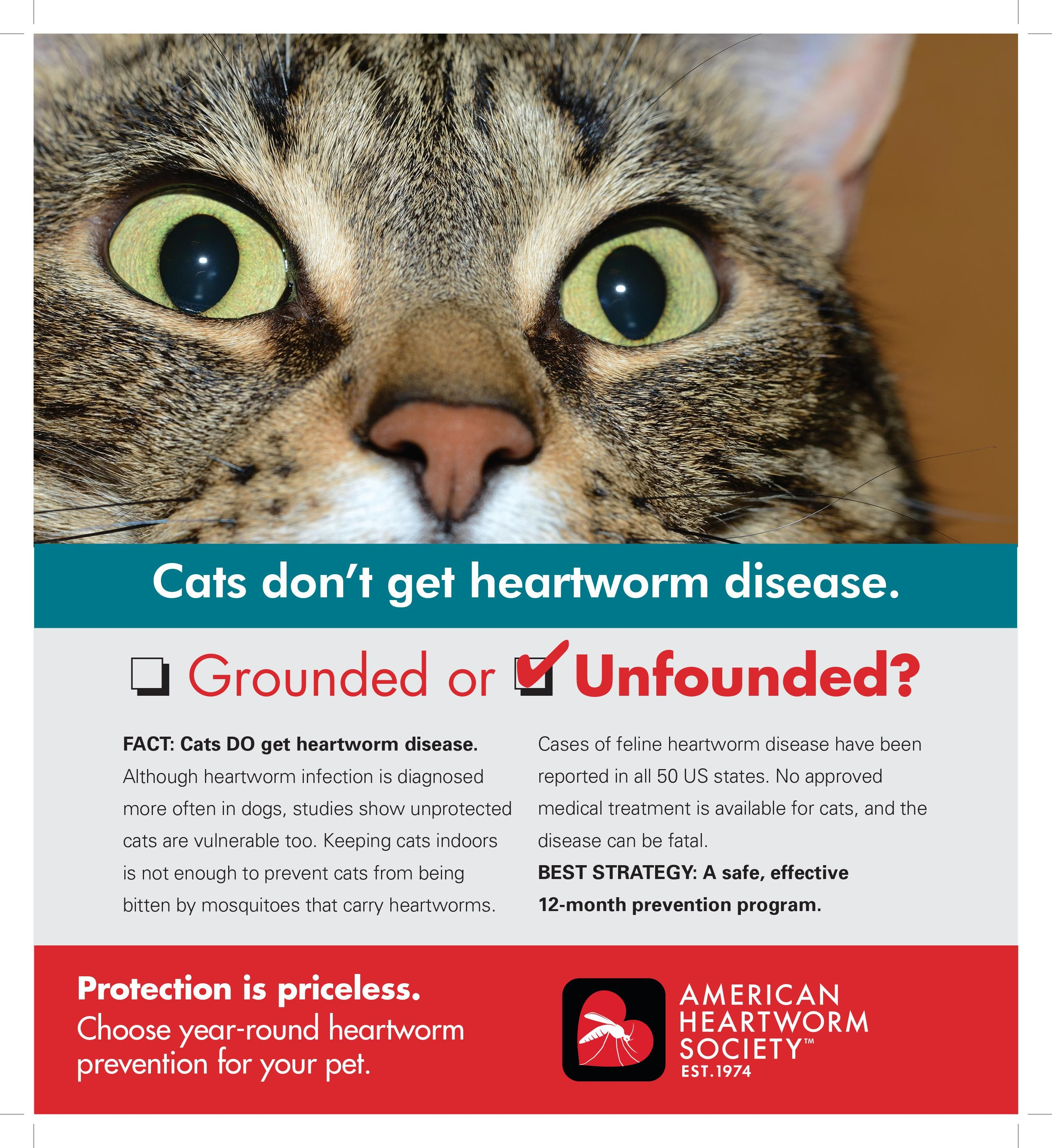 Cats And Heartworm Disease Heartworm Disease Heartworm Prevention Heartworm