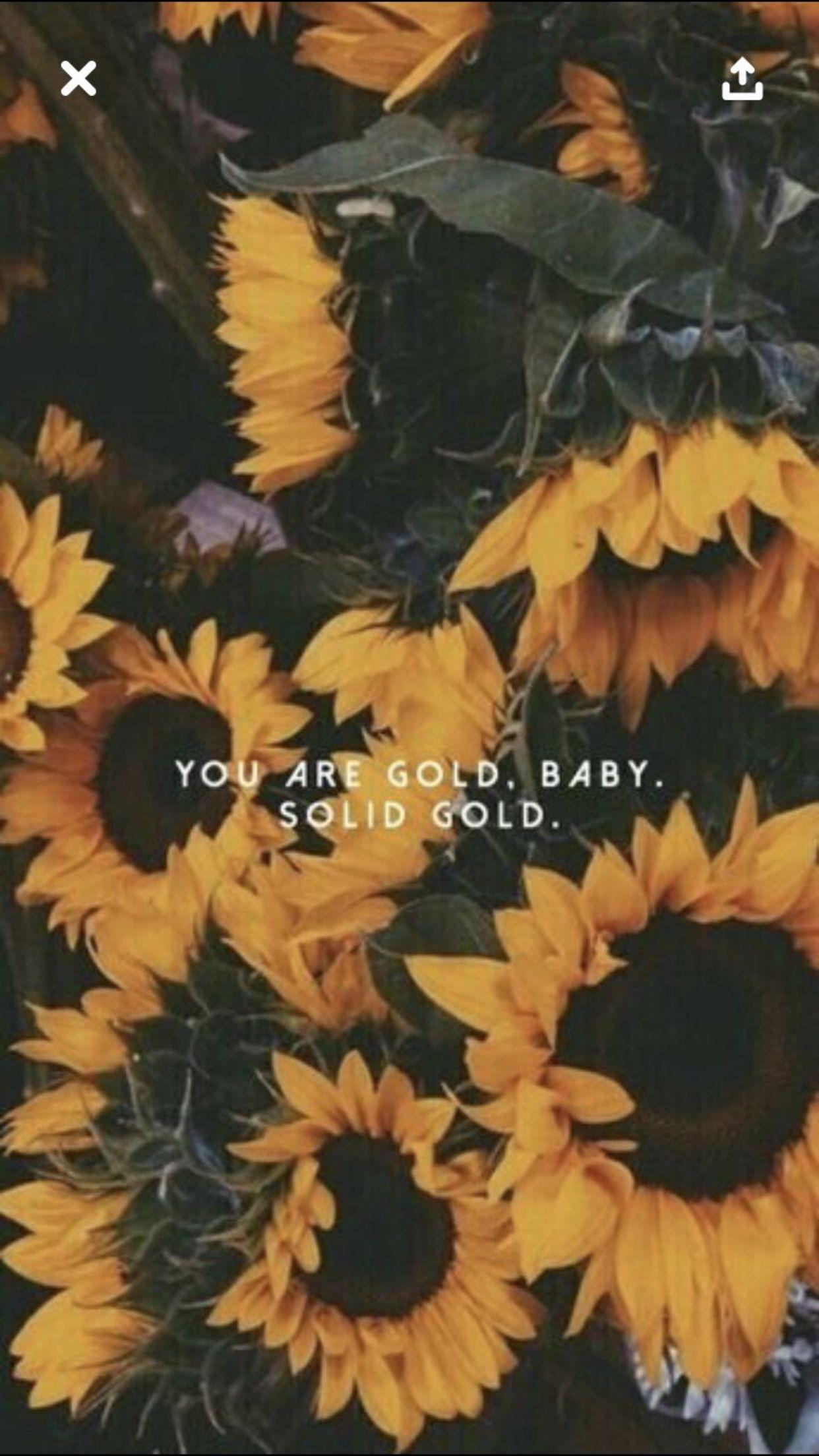 Pin By Katy On Hello Sunshine Sunflower Wallpaper Aesthetic