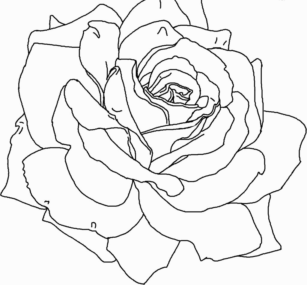 Roses Coloring | Coloring Pages | Pinterest