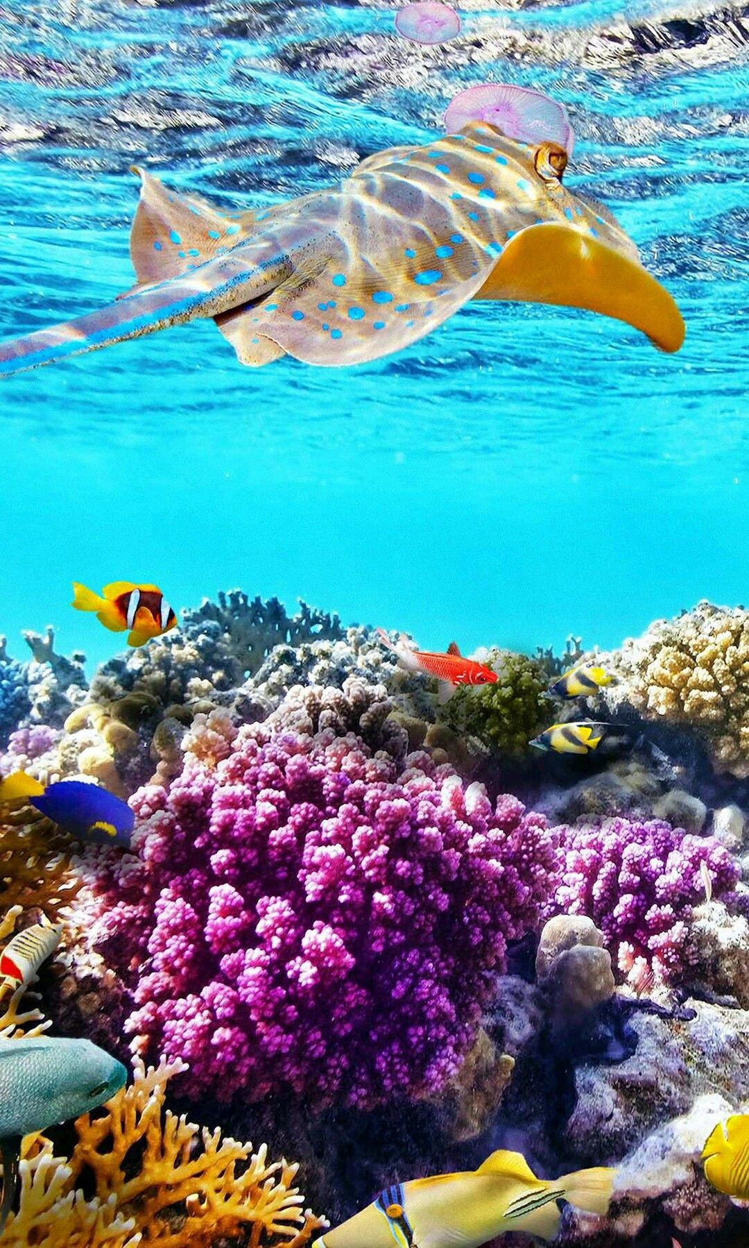 Pin by Ariel Dobrowolski on The ocean Underwater