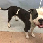 KING – A1093898