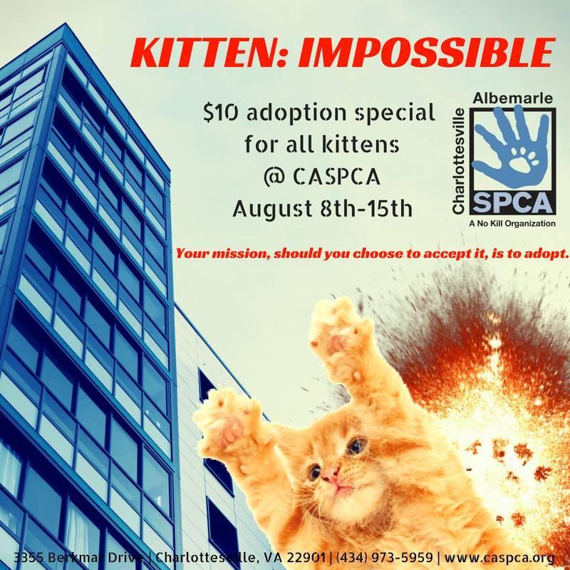 Charlottesville Albemarle (Virginia) SPCA Kitten Adoption