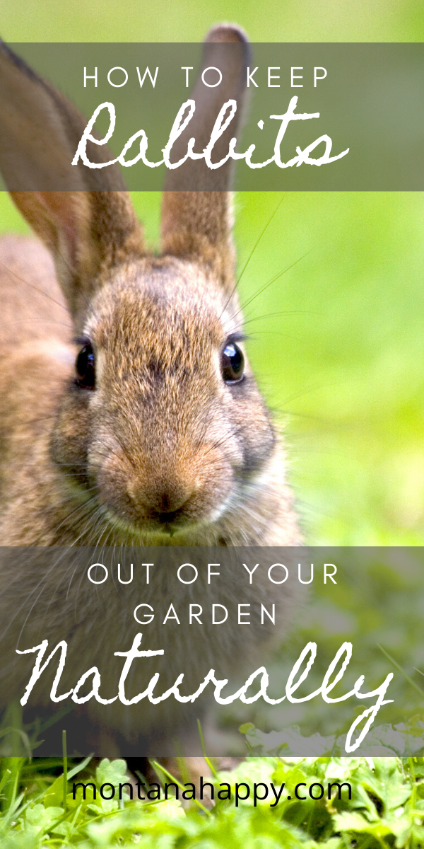 How to Keep Rabbits Out of Your Garden Naturally will help ...