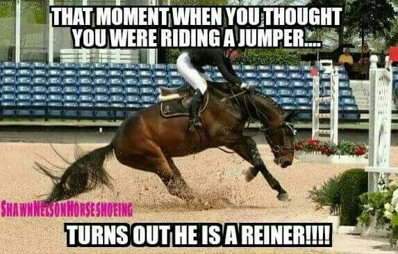 Funny Horse Quotes ArabianHorseAssociation | Horsin' Around | Horses, Funny horses  Funny Horse Quotes