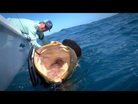 Monster Fishing On Shallow Florida Wrecks Monster Fishing Fish Salt Water Fishing