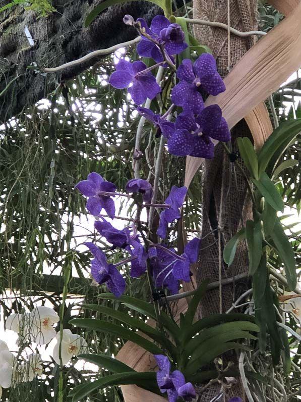 Exposition Mille et une orchidées au Jardin des Plantes de Paris - Paris côté jardin | Plante ...