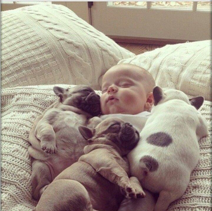 #baby #pug #puppy
