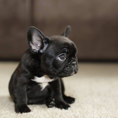 From Paris To London With Images Cute Animals Puppies Animals