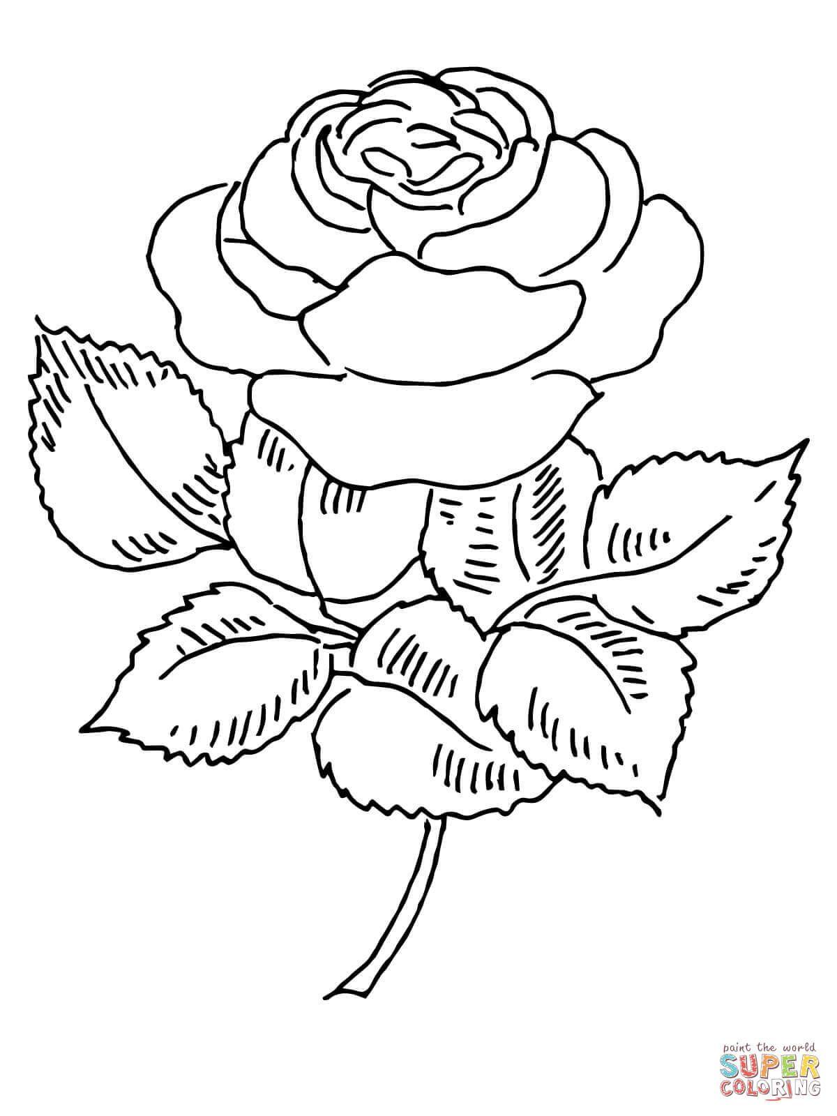 Blooming Rose | Super Coloring | Dibujos | Pinterest | Dibujo