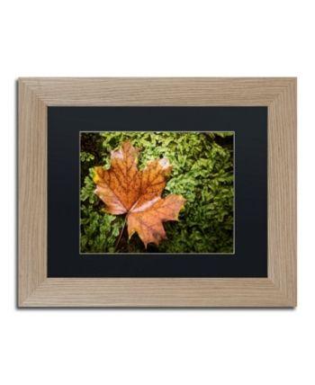 Jason Shaffer Maple Moss Matted Framed Art 14 X 11
