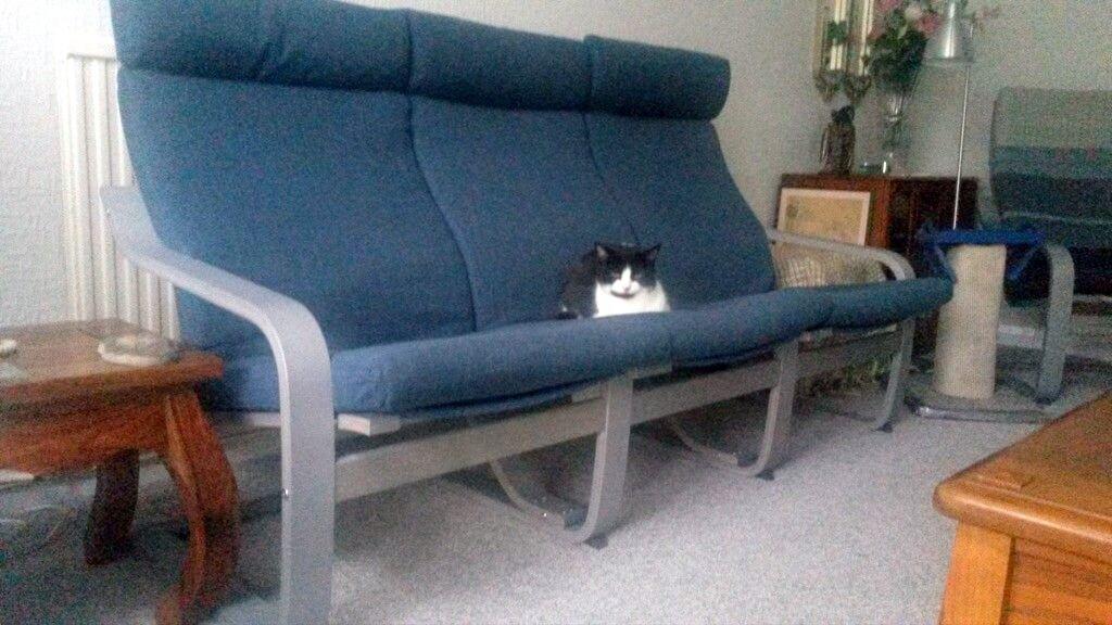 Triple Poang The Astonishing Cat Resistant Sofa Ikea Sofa