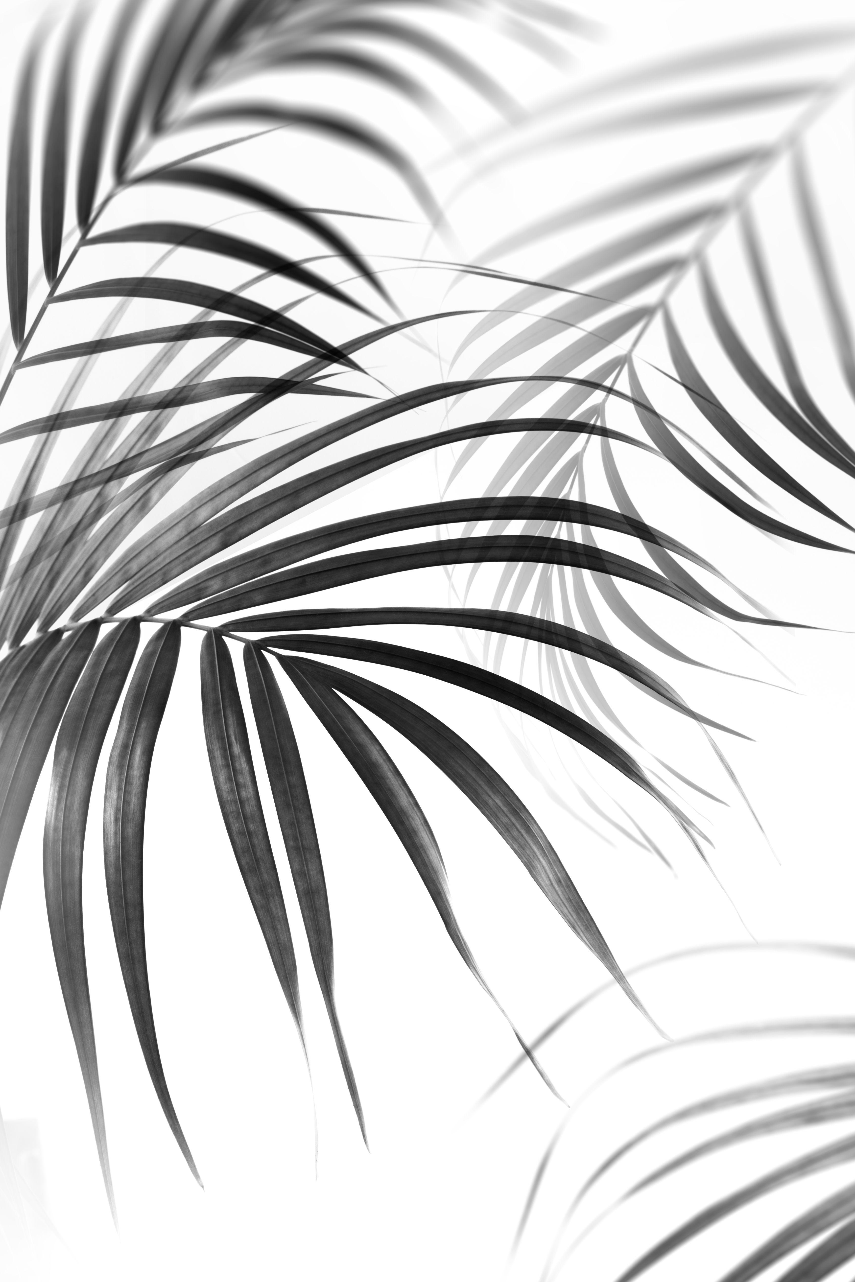Kunstdruck Premium Poster Botanik Minimalistische Wallpaper Hintergrund Farbe Poster Schwarz Weiss
