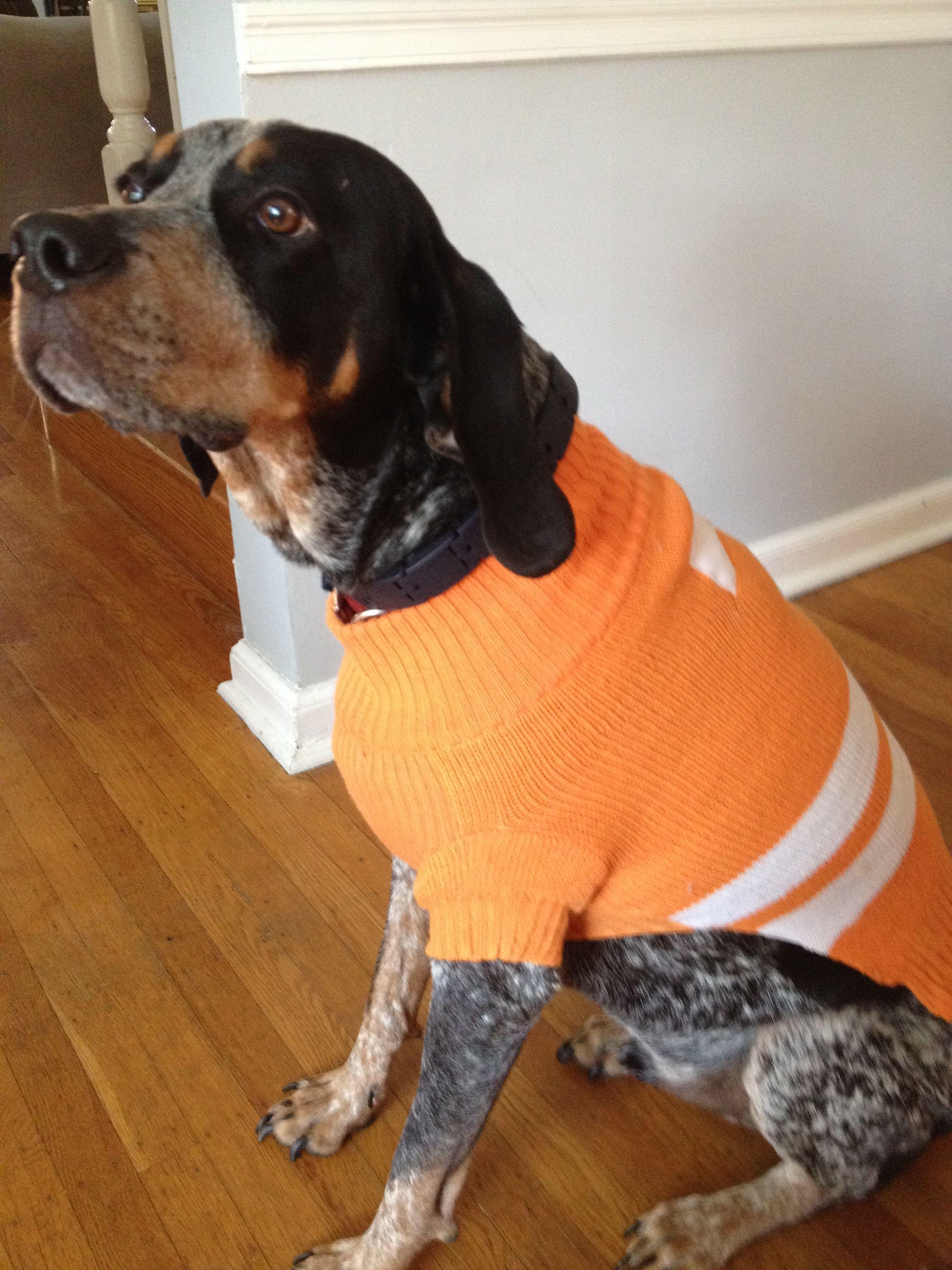My blue tick hound dog sporting a TN sweater. Go Vols