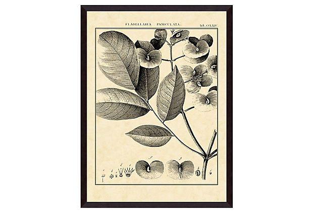 Vintage Botanical Study V on OneKingsLane.com