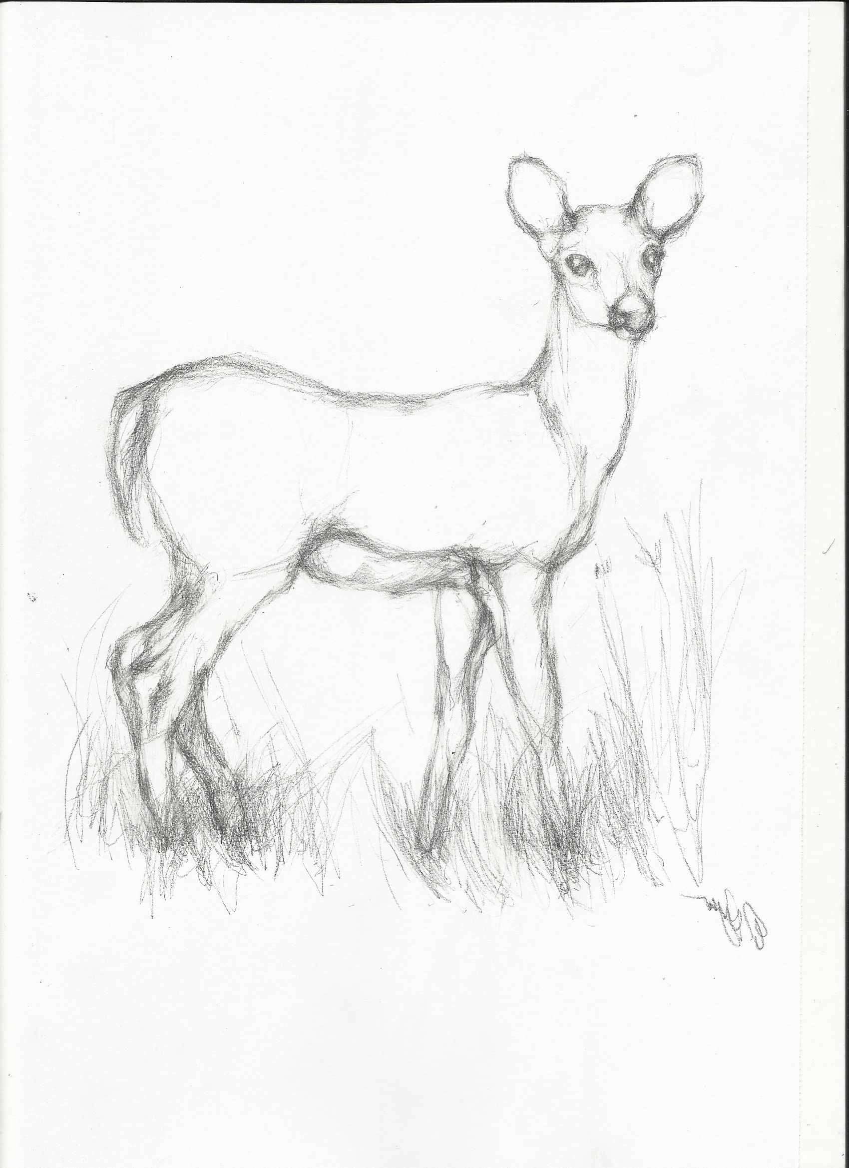 Pencil Easy Animal Sketch Drawing With Images Animal