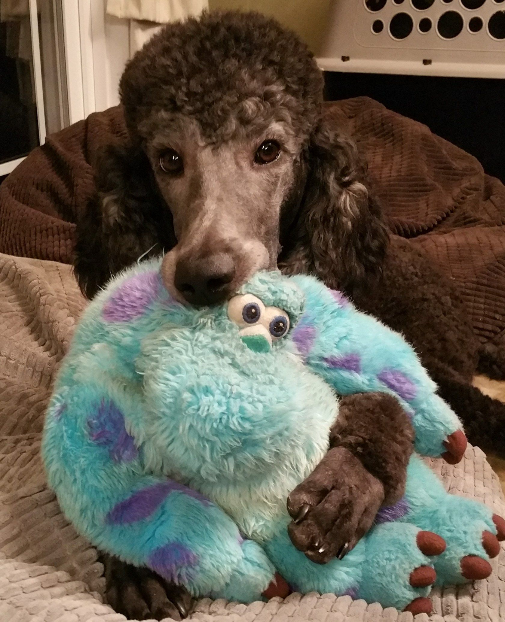 You Are Worthy Metanoia Cute Dogs Poodle Puppy Care