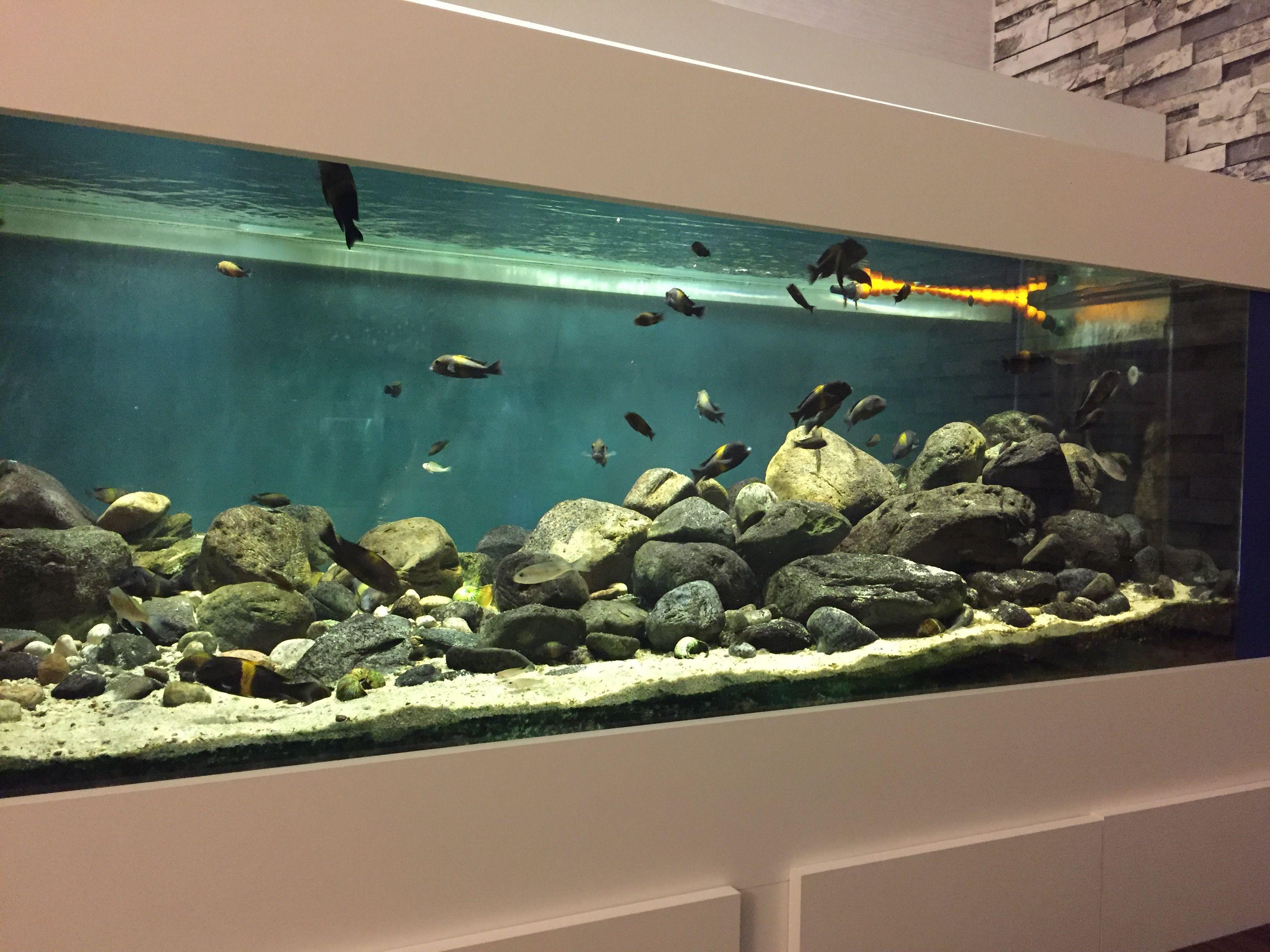 Pin By Abi Hurrin On Aquarium Terraium Cichlid Aquarium Aquarium Fish Tank Aquarium Fish