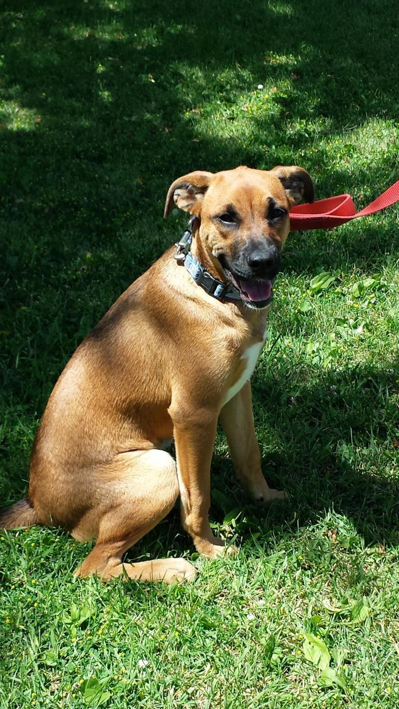 Adopt roxy on animal shelter animals pets