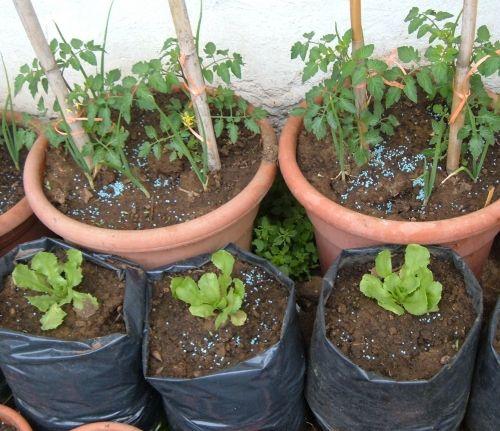 Come fare un orto sul balcone coltivare l 39 orto pinterest for Coltivare more in vaso