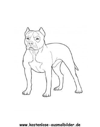 Ausmalbild Pitbull Ausmalbilder Hunde Pitbull Ausmalen