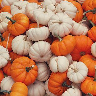 Stuff a few mini pumpkins inside a burrito.   21 Stupid Pumpkin Recipes You Should Make If You Really Love Pumpkin That Much
