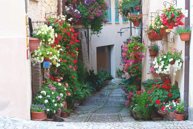 """Beautiful Umbria """"Finestre, Balconi e Vicoli fioriti"""" a Spello  Umbria, Italy  Pinterest ..."""