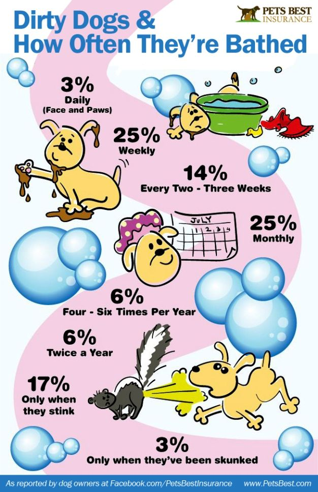 Pet Insurance Provider Pets Best Insurance Asked Dog Owners How Often They Give Their Dog A Bath Http Www Petsbest Co Dog Insurance Dog Infographic Dog Bath