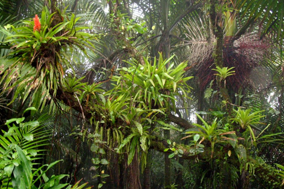 El Yunque Rain Forest Rainforest, Tropical garden
