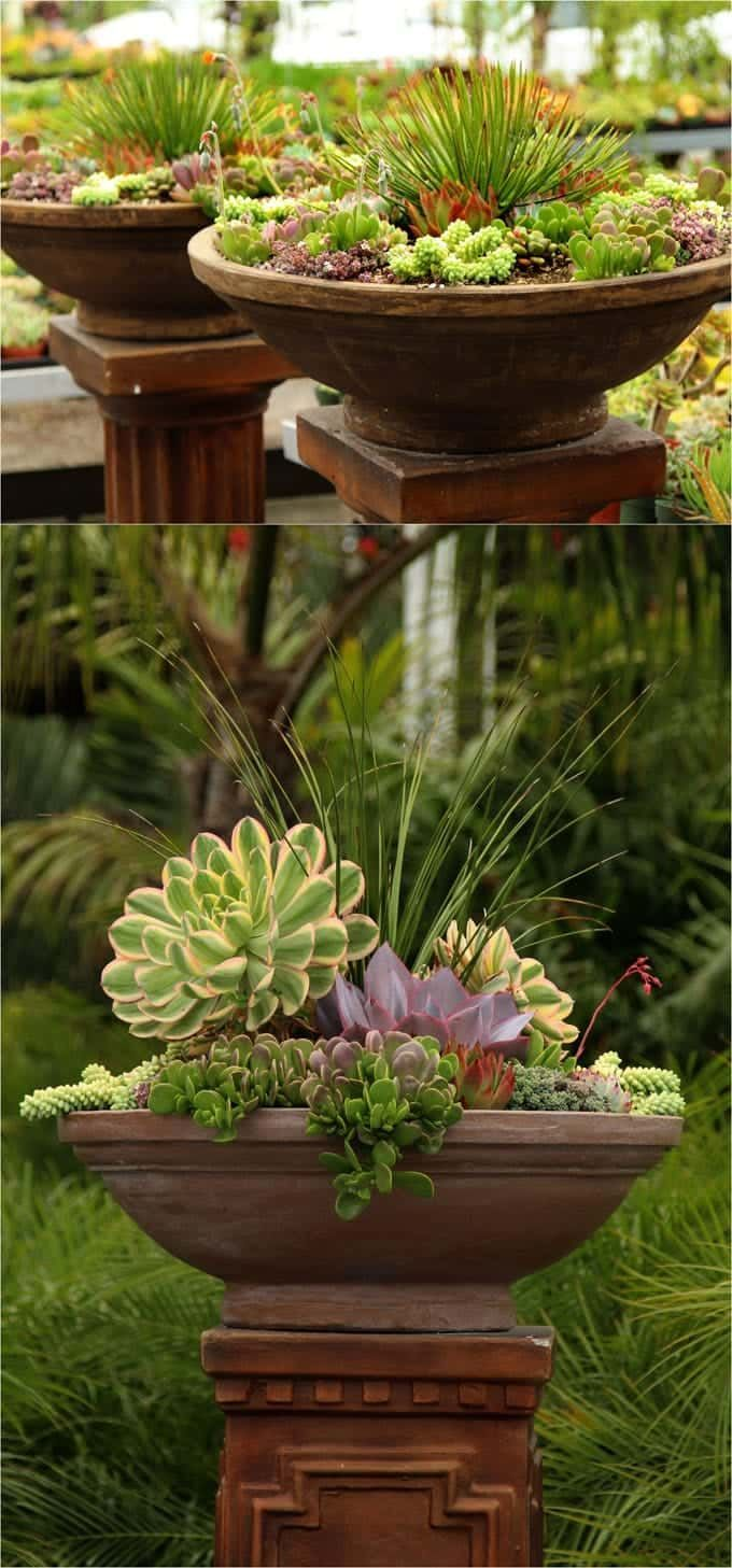 How to Plant Beautiful Succulent Gardens in 5 Easy Steps   Pinterest ...