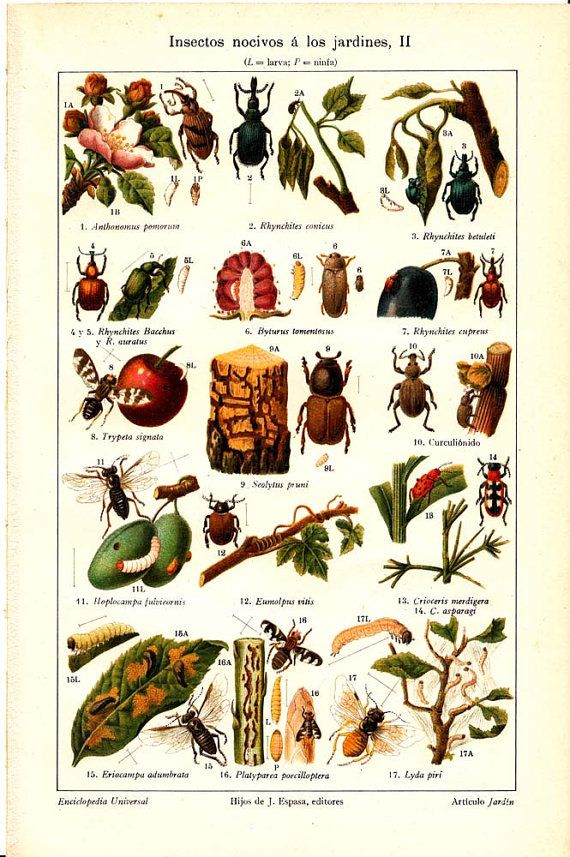 garden insects garden bugs garden pests insect pest garden pictures