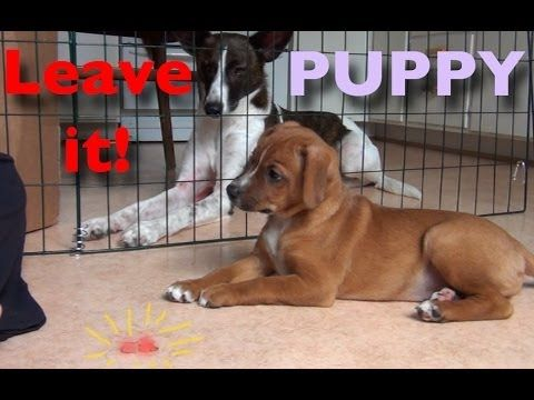 Teach your puppy to 'Leave It' - YouTube