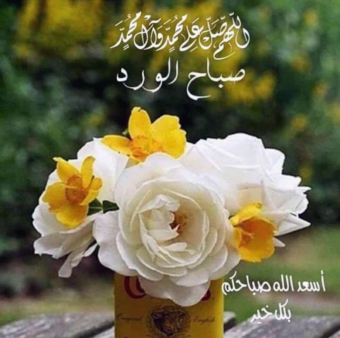 أسعد الله صباحكم بكل خير صباح الورد Rose Flowers Plants