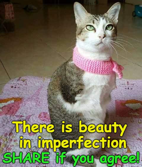 21++ Confident cat info