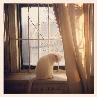 Marsha in a sunny UWS window