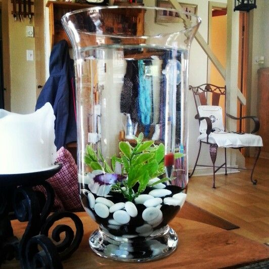 un aquarium classe transformer un vase en aquarium pour b ta d co pinterest aquarium. Black Bedroom Furniture Sets. Home Design Ideas
