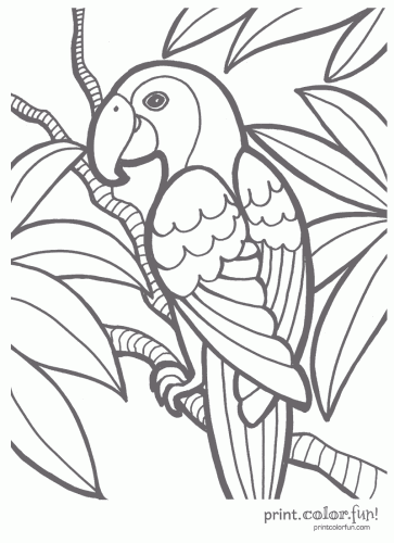 Dover Coloring Pages Exotic Flowers